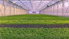 Aerial - Greenhouse hall with different types of herbs Stock Footage