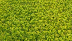 Aerial - High angle view of green lettuce in a greenhouse Stock Footage