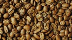 Seeds choicest Arabica vraschayutsya. Nicaragua grade Stock Footage