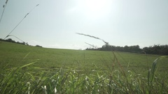 Gimbal shot at a landscape, field with grass at summer Stock Footage