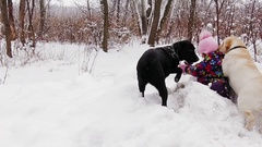 Little girl playing with her pale yellow and black labradors on snow, slowmotion Stock Footage