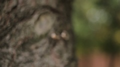 Wedding rings on a tree zoom camera Stock Footage