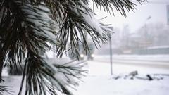 Fir needles  and defocused cars on a snowed road Stock Footage