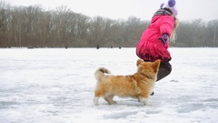 Funny corgi fluffy puppy walking with little girl outdoors Stock Footage
