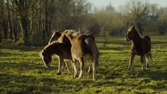 Beautiful Horses playing in group 4k Stock Footage