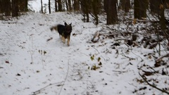 Dog running towards his owner in the forest Stock Footage