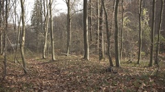 Gimbal slow motion shot in the wood at autumn Stock Footage