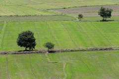 Rural farmland to grow rice. Stock Photos