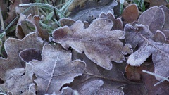 Backgrouind leaves frost Stock Footage