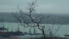 Small bush on the background of the port of Murmansk. Editorial use. Stock Footage