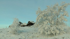 Covered with frost the trees sway in the wind. Stock Footage