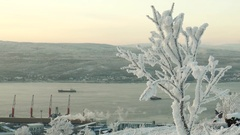 Snow-covered tree branches on the background floating on the Bay ships. Stock Footage