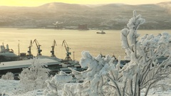 Frosted tree against the backdrop of the bay and the ship sailing. Stock Footage