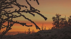 Frosted trees and bushes on a background of pink sunset sky. Stock Footage