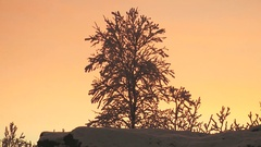 Frosted tree against the pink sunset sky. Stock Footage