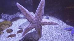 Beautiful saltwater aquarium starfish stock footage video Stock Footage