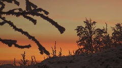 Snow-covered trees and bushes on a background of pink sunset sky. Stock Footage