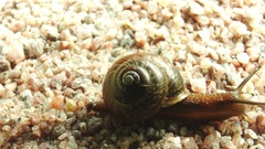 Snail slowly crawling on the small rocks. Stock Footage