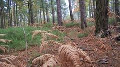 A man mountain biking on a singletrack dirt trail through a forest. Stock Footage