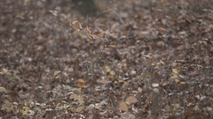 Gimbal slow motion shot in the forest at autumn Stock Footage