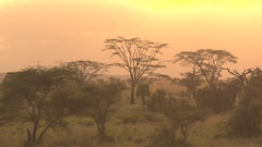 Palm savannah and acacia woodland over golden sky on beautiful evening in Africa Stock Footage