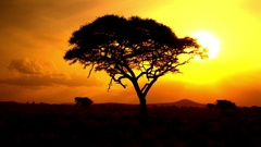 CLOSE UP: Sun rising behind silhouetted acacia tree in savanna wilderness Stock Footage