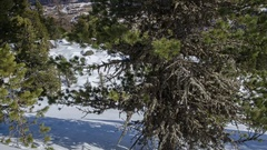 Winter Dolly Shot over Pine Tree in Snowy Forest with Snow Pillows Time Lapse Stock Footage