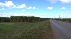 Sugar cane plantation (Saccharum officinarum) near highway. Cuba Stock Footage