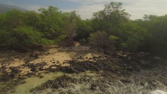 Aerial Tropical Jungle Paradise Forest Beach Maui Pull Out From Beach To Forest Stock Footage