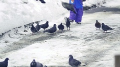 Little boy running towards a flock of pigeons that fly up in fright. Slow motion Stock Footage