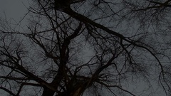 Scary trees in the woods, in the dark. horror Scene. Stock Footage