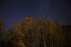 6K Astro Timelapse of Stars over Aspen Fall Foliage in Eastern Sierra Stock Footage