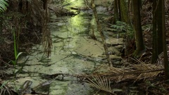 Incredibly clear water of Wanggoolba creek on Fraser Island Stock Footage