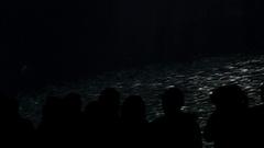 People Look at Sardines Stock Footage