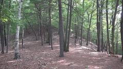 Walden Woods, Walden Pond, MA, United States. Stock Footage