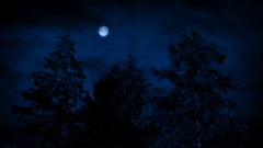Moon And Trees On Windy Night Stock Footage