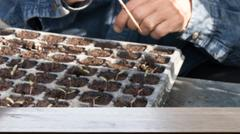 Plant seedling in the vegetable plot (blur image) with selected focus empty.. Stock Photos