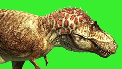 T Rex Tyrannosaur Feathered Run Close up Loop Jurassic World Dinosaurs Stock Footage