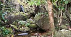Small waterfall in Masoala national park, Madagascar Stock Footage