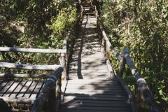 Rain forest walk way in Ang Ka nature trail located in Doi inthanon nationa.. Stock Photos