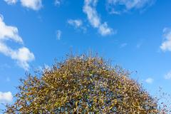 Crown of a Tree in Autumn Stock Photos