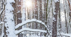Snowy forest after a snowstorm. Timelapse. Stock Footage