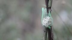 One fat ball bird feeder. feeding birds in winter Stock Footage