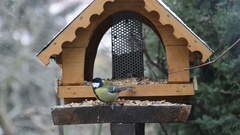 Two great tits on bird feeder in winter time Stock Footage