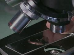 Daphnia on microscope slide Stock Footage