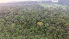 Descending to the misty rainforest canopy at dawn Stock Footage