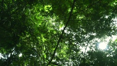 Sun rays shine through tree branches at summer. Green leaves background Stock Footage