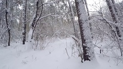 Snowbound landscape. Forest after a snowfall. Stock Footage