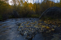 5K MoCo Timelapse of Fall Foliage by River at Dawn in Eastern Sierra Stock Footage