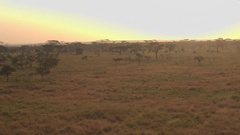 AERIAL: Serengeti plains and savanna on dramatic misty golden light morning Stock Footage